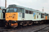 FARISH 371-136 Class 31/1 (Refurbished) 31319 Railfreight Petroleum * PRE ORDER 123.21 *